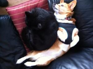 Dog and Cat Yin Yang