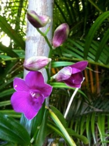 Orchid tied to tree decides to blossom