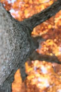 treelookingup